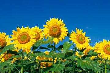 直前割!夏の特別価格 サマースペシャル (お部屋のみ) 夏休みやお盆期間のご旅行に!