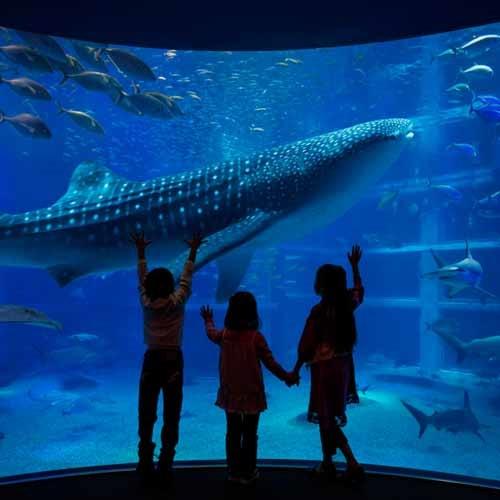 世界最大級の水族館「海遊館」の入場券付宿泊プラン